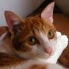 profile_miu.jpg